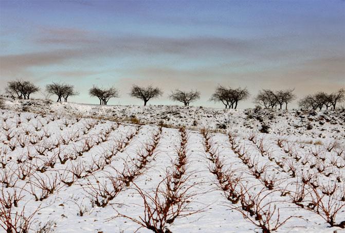 Nieve viñedos